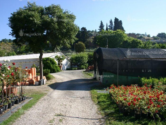FABRIZIO Perugia foto 3