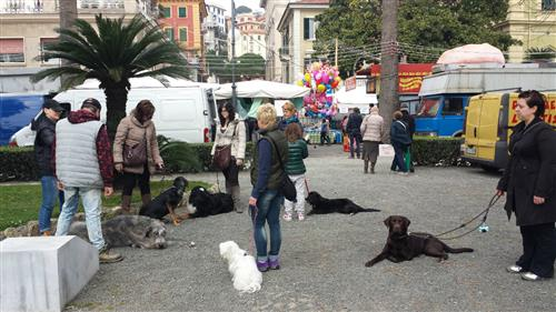 DOUBLE J FOR DOGS Vezzano Ligure foto 17
