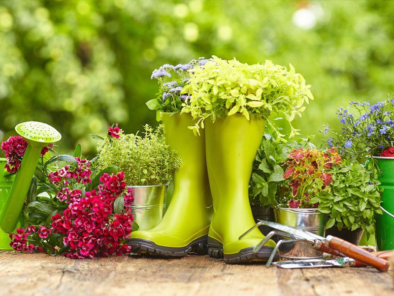 occasione piantine promozione piante vedelago offerta fiori vedelago agraria s sebastiano