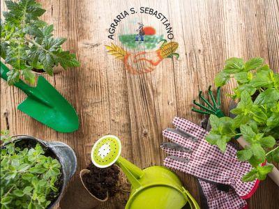 promozione prodotti agricoli offerta arredo giardino agraria s sebastiano