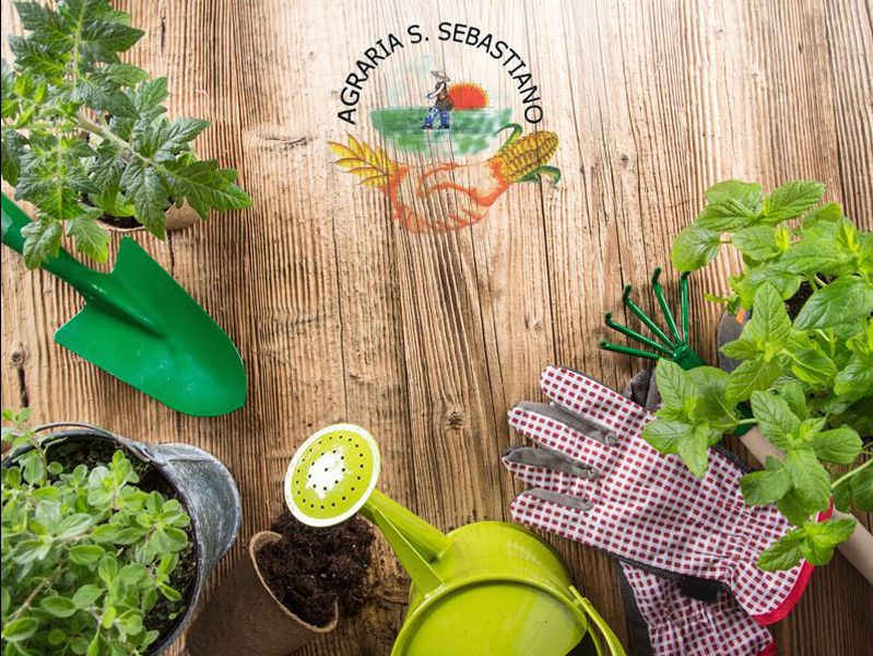 Promozione Prodotti agricoli - Offerta Arredo Giardino - Agraria S.Sebastiano