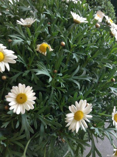 piante e fiori cura delle piante agraria vannacci
