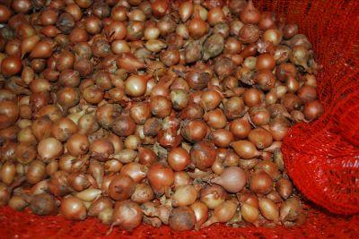 cipolla aglio patatate