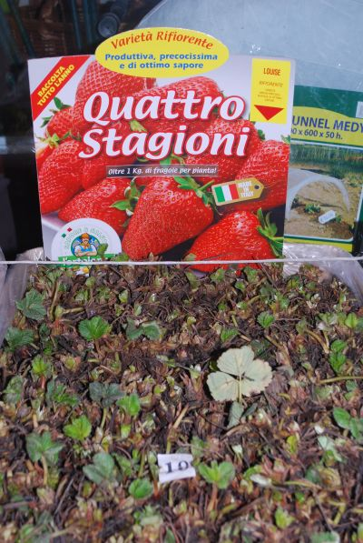 roiatti vanni agricoltura orto giardino