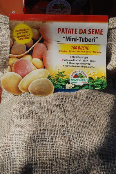 patate mini tuberi patate da seme