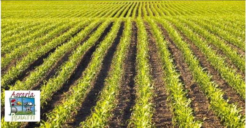 Agraria Roiatti offerta vendita prodotti per l'agricoltura - occasione produzione agricola