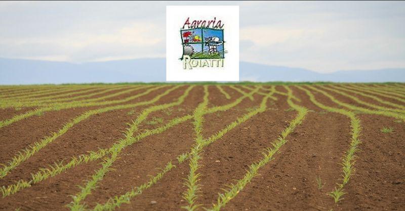 Offerta vendita di prodotti per l'agricoltura Udine - Occasione produzione agricola Udine