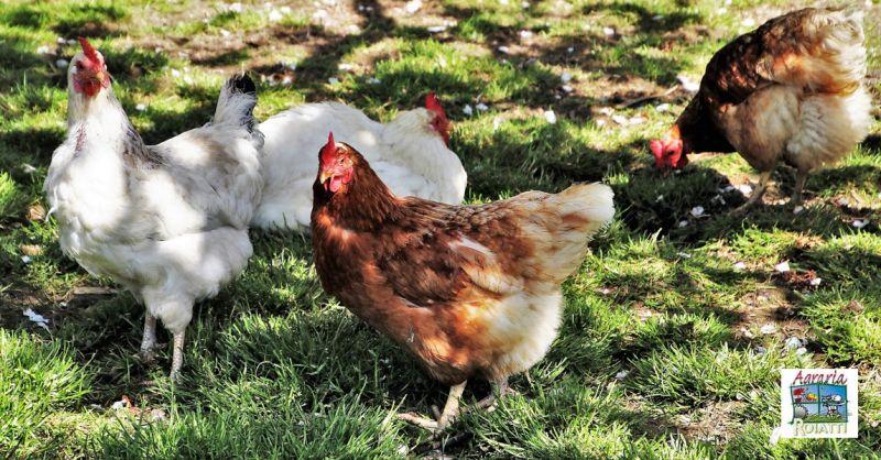 AGRARIA ROIATTI - Offerta vendita di mangimi per uccelli e prodotti avicoli Udine