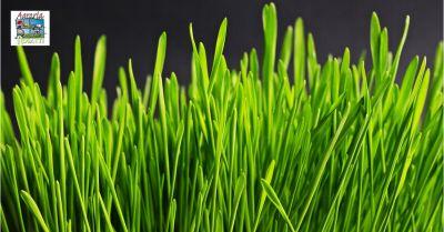 agraria roiatti offerta vendita e produzione di sementi per il prato udine