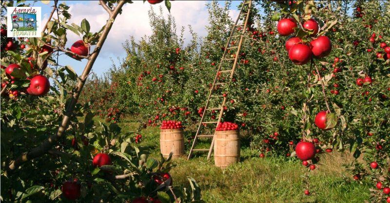 Offerta vendita concimi Udine - Occasione vendita prodotti per l'agricoltura Udine