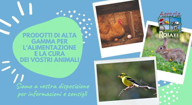 Vendita mangimi per animali da cortile a Udine – Occasione vendita cibo per cani e gatti di alta qualità a Udine