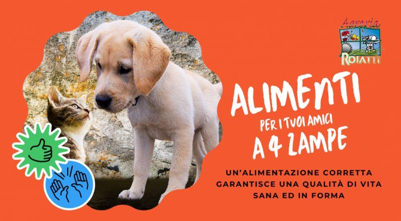 Vendita cibo per cani e gatti a Udine – Offerta alimenti cibo e secco per cani e gatti a Udine