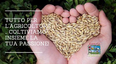 vendita di concimi terricci e sementi a udine occasione vendita tutto per l orto sementi per l orto in vendita a udine