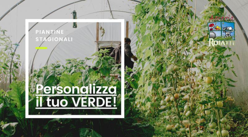 Vendita piante stagionali a Udine – occasione vendita piante a fioritura stagionale a Udine