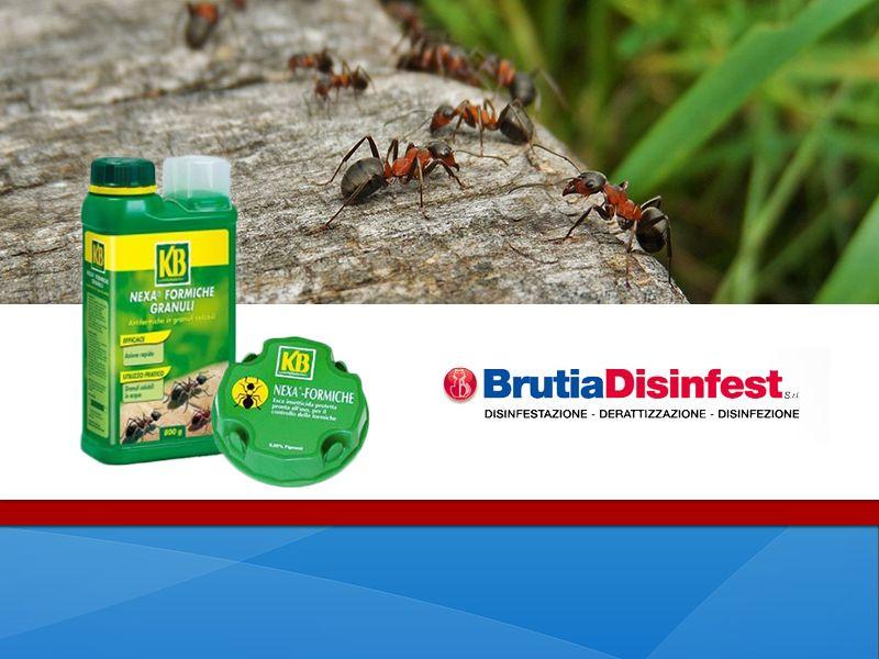 offerta nexa formiche occasione prodotto contro formiche brutia disinfest