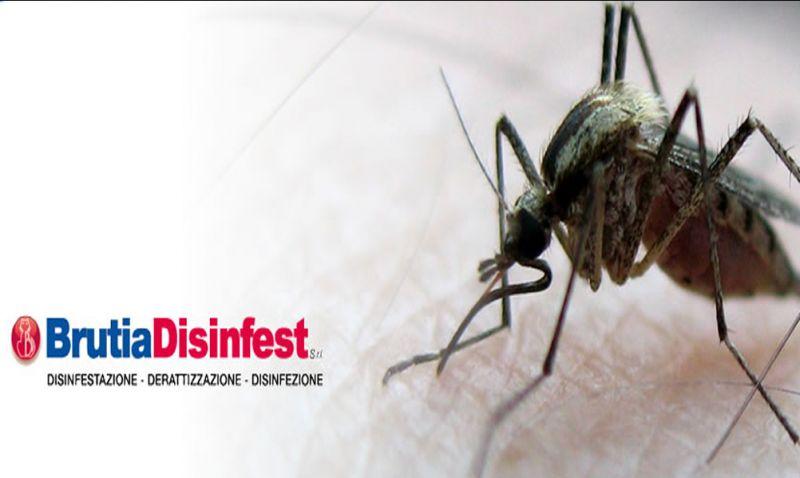 Offerta disinfestazione cosenza calabria intervento anti mosche zanzare insetti striscianti