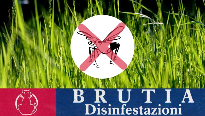 Offerta disinfestazione zanzare cosenza - offerta disinfestazione cosenza - disinfezione rende