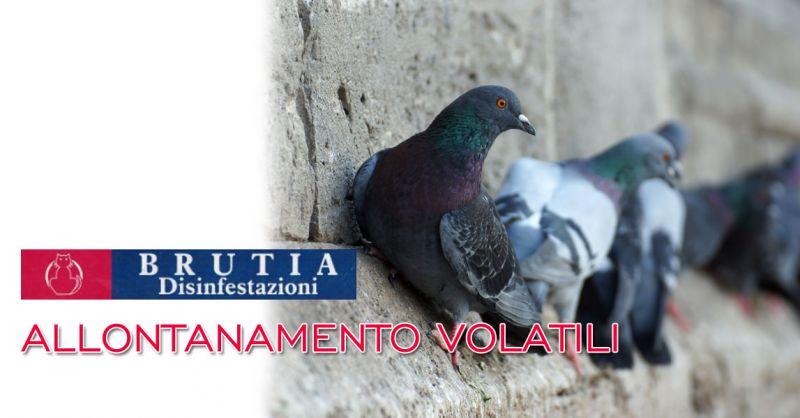 Offerta servizio di allontanamento volatili Cosenza – Promozione allontanamento piccioni Cosenza