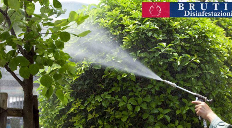 Offerta disinfestazione zanzare Cosenza – Promozione disinfestazione zanzare giardino Cosenza