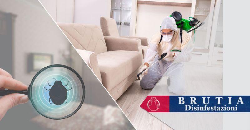 Offerta interventi di deblattizzazione Cosenza – Promozione eliminazione blatte e scaraffi Cosenza