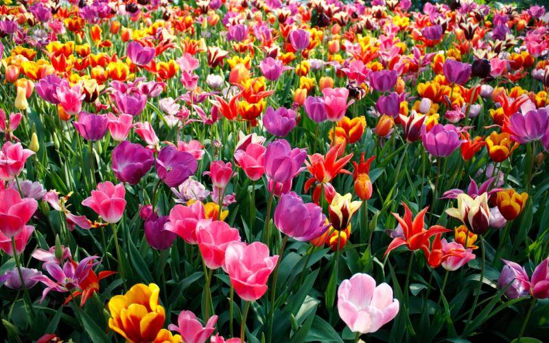offerta produzione vendita piante ornamentali occasione fiori promozione piante da frutto