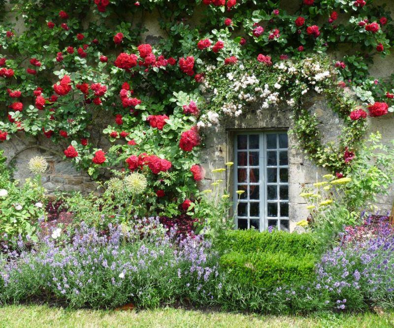 offerta piante tappezzanti rampicanti coprisuolo occasione fiori siepi per giardini vicenza