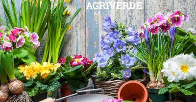 agriverde offerta vendita accessori giardinaggio occasione prodotti per irrigazione treviso