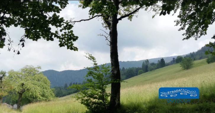 Occasione Nordic Walking sul Col Visentin a Treviso