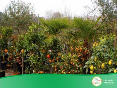 promozione vivaio offerta piante occasione giardino dream garden