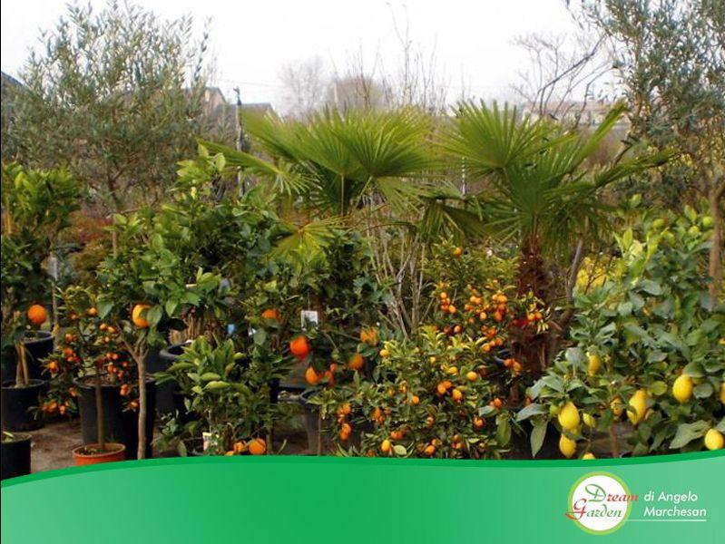 Promozione Vivaio - Offerta piante - Occasione Giardino - Dream Garden