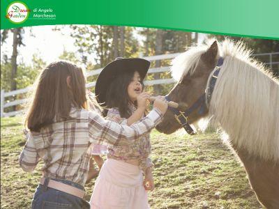 offerta evento cavalli e pony promozione equitazione evento dream garden
