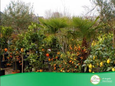 promozione vivaio treviso offerta vendita piante treviso occasione giardino dream garden