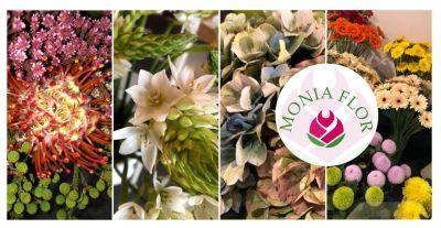 fioricoltura monia flor offerta vendita fiori freschi recisi e piante rigogliose