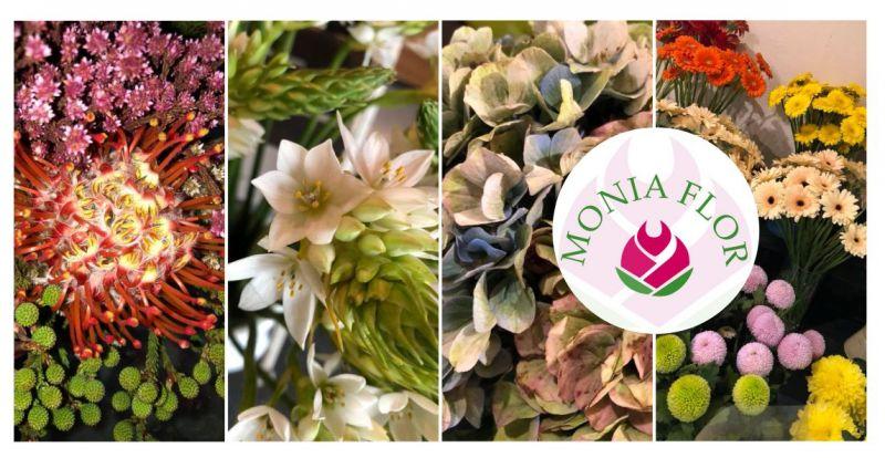 Fioricoltura Monia Flor - offerta vendita fiori freschi recisi e piante rigogliose