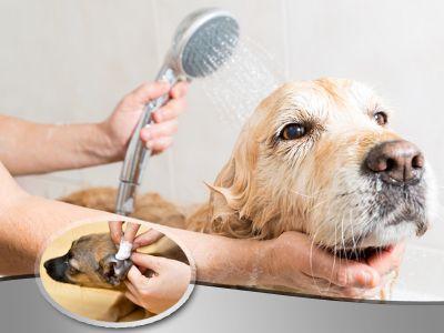 promozione toelettatura offerta pulizia orecchie bagni cani e gatti toelettatura silvia