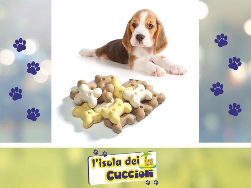 offerta biscotti per cani sfusi narni - promozione snack biscotti per cani - isola dei cuccioli