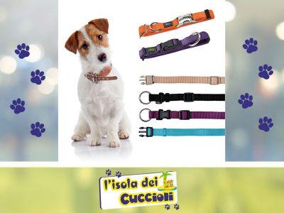offerta collare per cane narni promozione collari professionali narni isola dei cuccioli