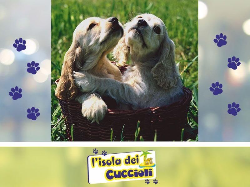 offerta toelettatura animali narni - promozione tosatura stripping narni - isola dei cuccioli