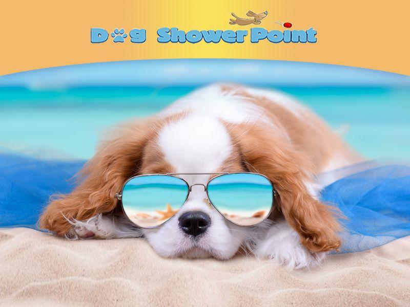 offerta toelettatura cane promozione toelettatura self service dog shower