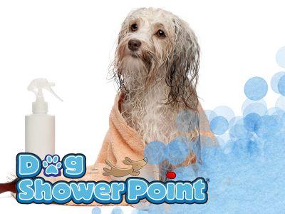 offerta toelettatura cani promozione pulizia cani toelettatura self service terni dog shower