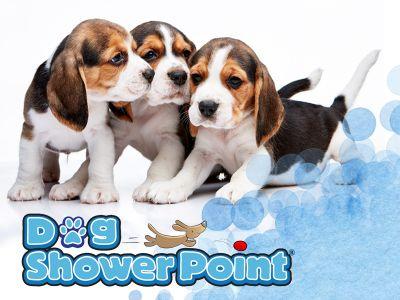 offerta trattamenti antiparassitari cane promozione prodotti antiparassitari cane dog shower