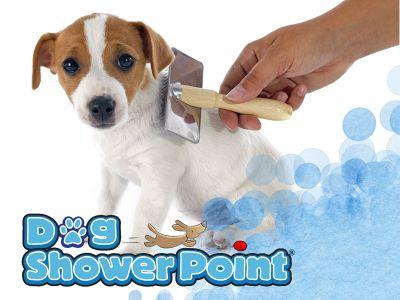offerta taglio pelo cane promozione tosatura trimming toelettatura dog shower terni