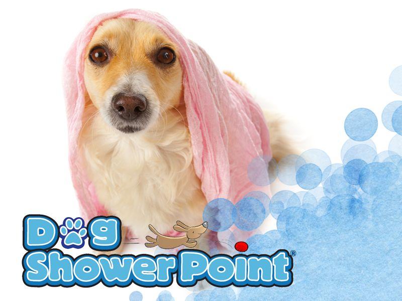 offerta lavaggio cani terni - promozione pulizia toelettatura cani - dog shower