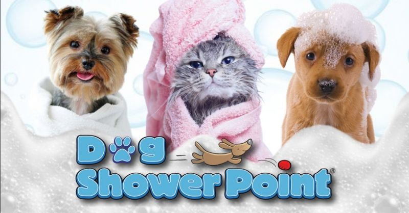 Offerta dove lavare il cane self service Terni - Occasione toeletta per animali domestici Terni