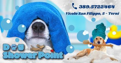 offerta toeletta per cani self service occasione migliore toelettatura cani self service terni