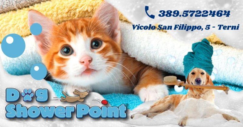 Offerta Servizio toelettatura gatti professionale - Occasione toeletta per cani con operatore Terni