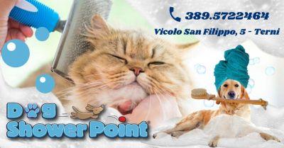 offerta servizio taglio unghie cani gatti occasione toelettatura professionale per cani gatti terni