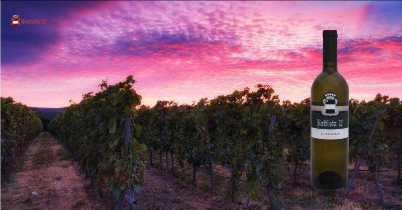 Offerta vendita vino frizzante Udine - Occasione produzione e vendita Busoni Udine
