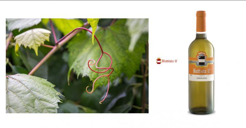 Offerta vendita vino bianco Udine - Occasione produzione e vendita di Verduzzo Friulano Udine