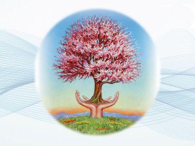 promozione erboristeria cavallino offerta bellezza erboristeria erboristeria natura e salute
